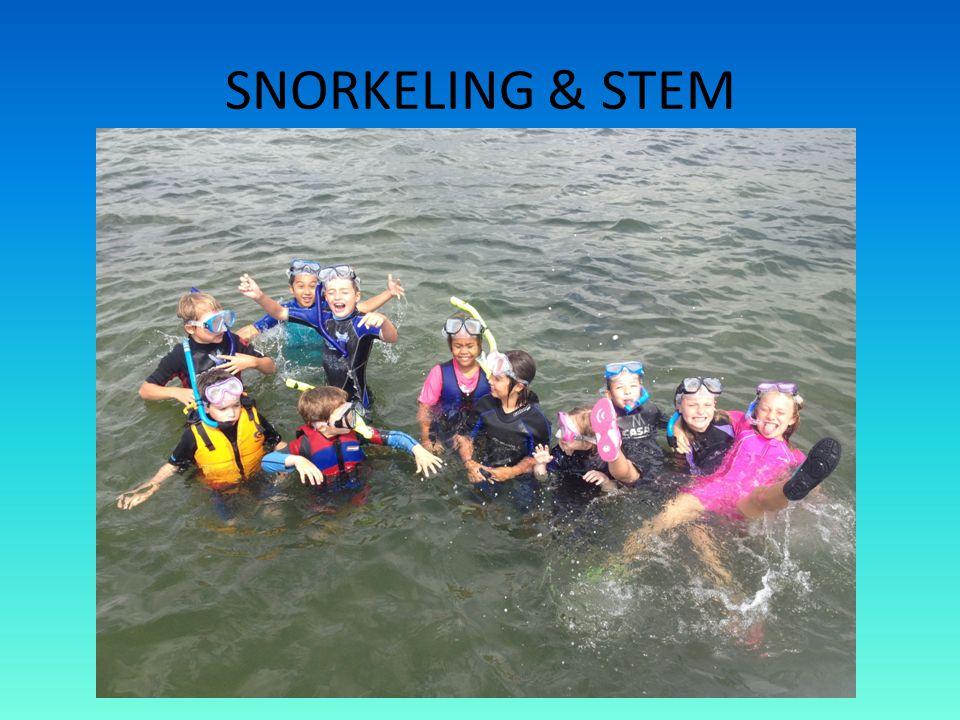 SNORKELING & STEM