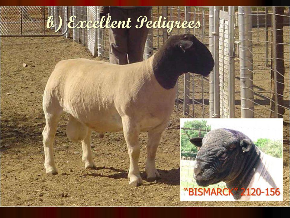 BISMARCK 2120-156 b) Excellent Pedigrees