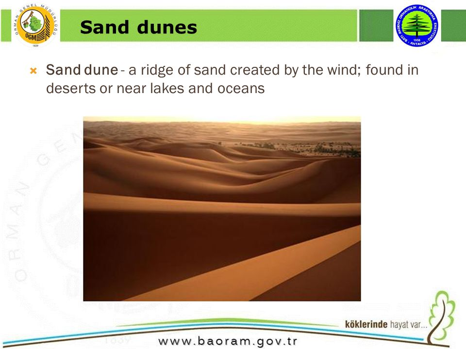 Sand dune - a ridge of sand created by the wind; found in deserts or near lakes and oceans Sand dunes