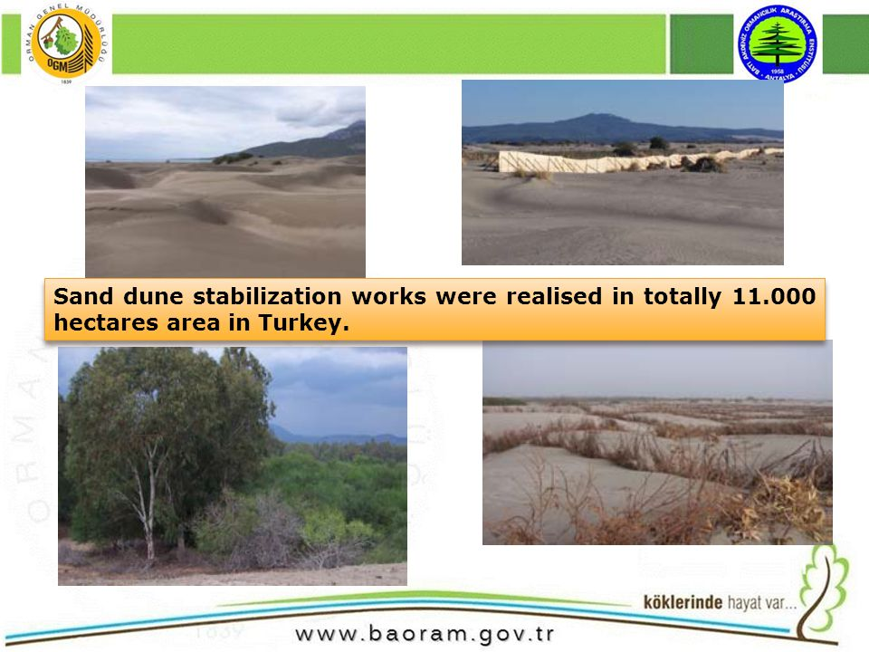 Sand dune stabilization works were realised in totally 11.000 hectares area in Turkey.