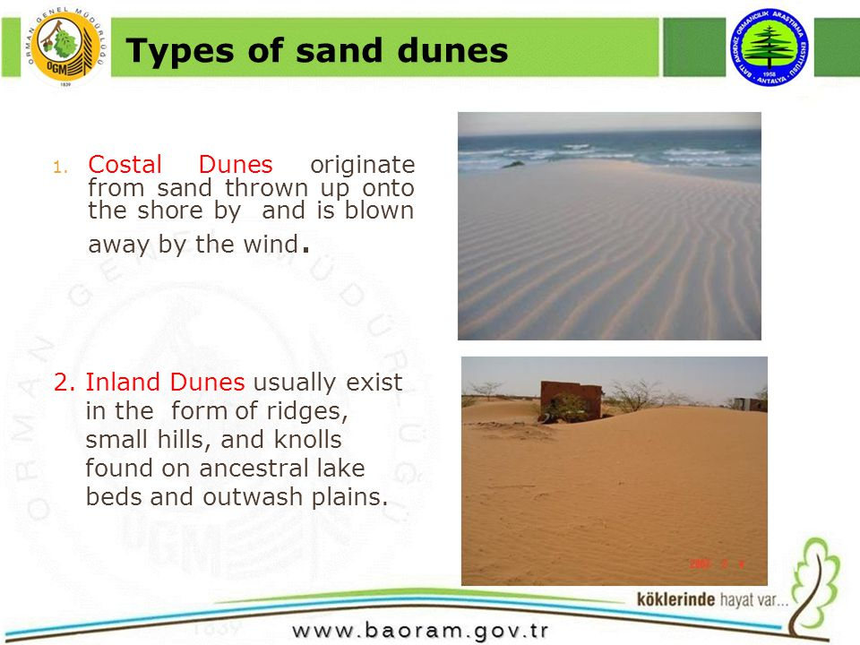 1. Costal Dunes originate from sand thrown up onto the shore by and is blown away by the wind.