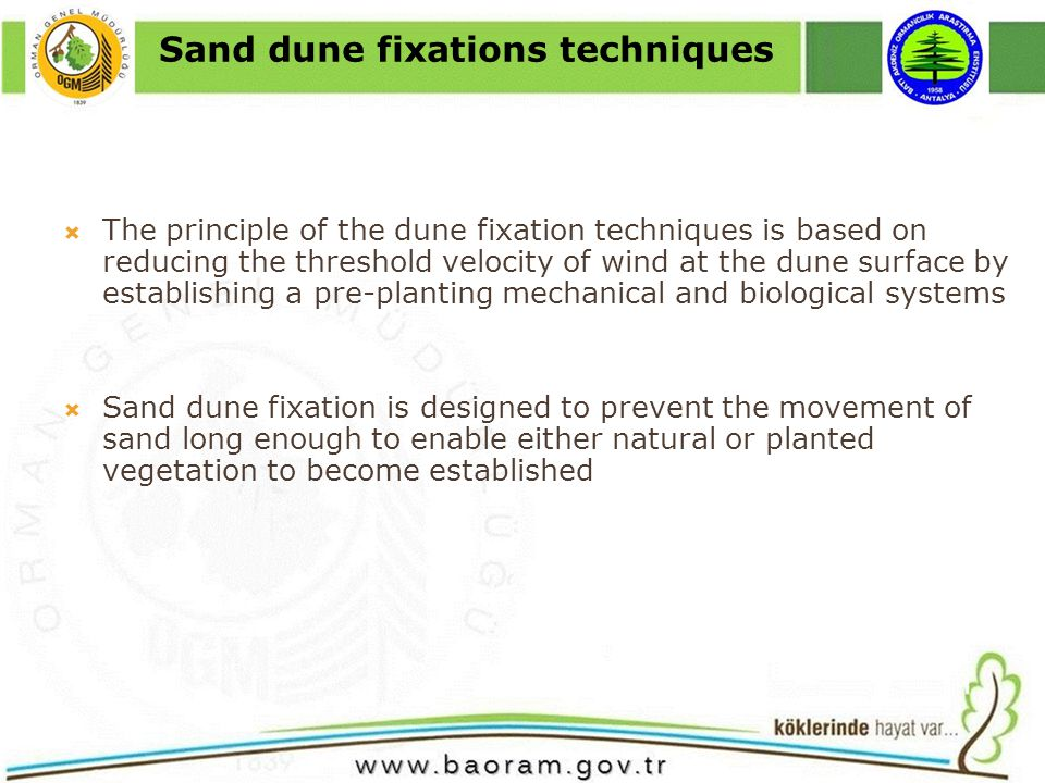 The principle of the dune fixation techniques is based on reducing the threshold velocity of wind at the dune surface by establishing a pre-planting mechanical and biological systems Sand dune fixation is designed to prevent the movement of sand long enough to enable either natural or planted vegetation to become established Sand dune fixations techniques