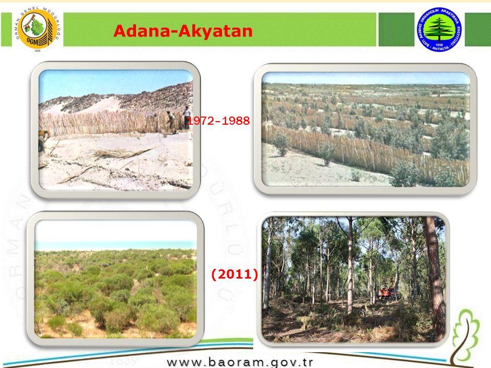 Adana-Akyatan (2011) 1972–1988