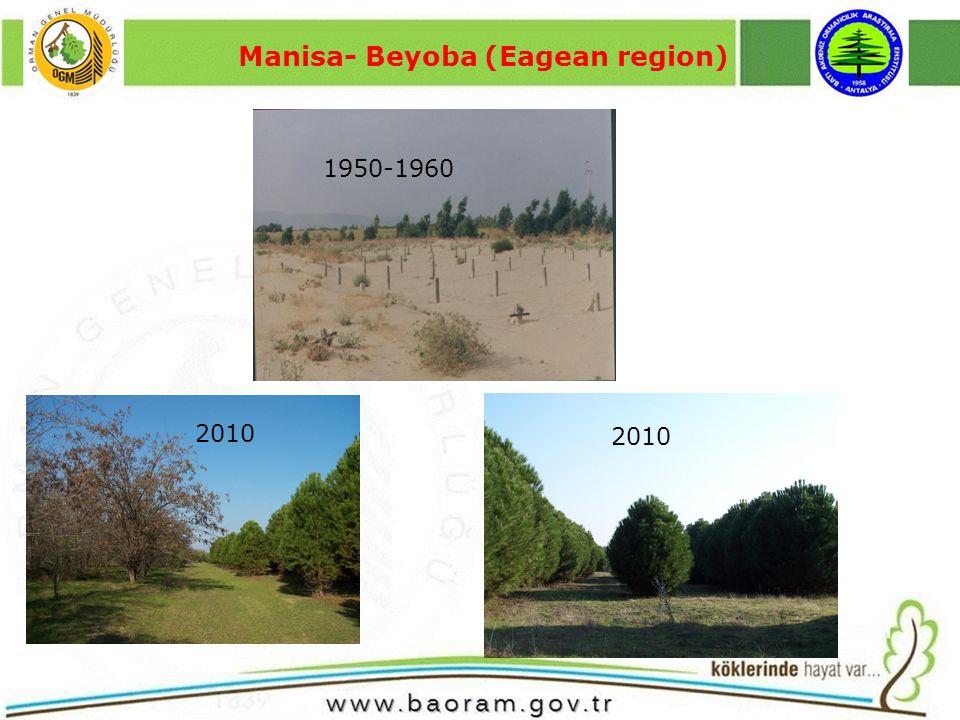 Manisa- Beyoba (Eagean region) 1950-1960 2010