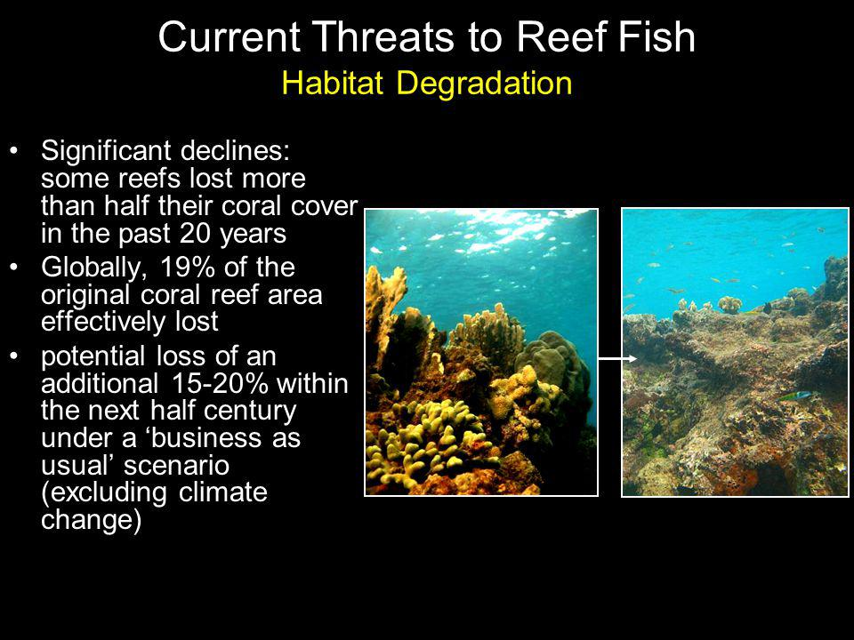 Current Threats to Reef Fish Habitat Degradation Significant declines: some reefs lost more than half their coral cover in the past 20 years Globally, 19% of the original coral reef area effectively lost potential loss of an additional 15-20% within the next half century under a business as usual scenario (excluding climate change)