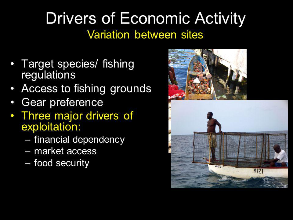Target species/ fishing regulations Access to fishing grounds Gear preference Three major drivers of exploitation: –financial dependency –market access –food security Drivers of Economic Activity Variation between sites