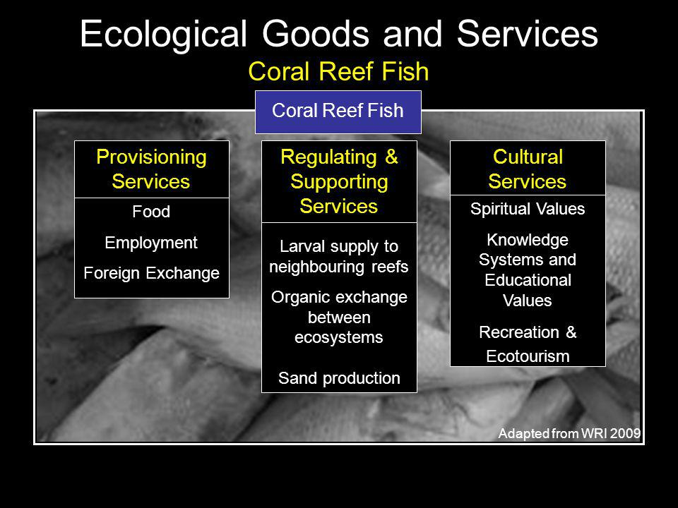 Coral Reef Fish Provisioning Services Food Employment Foreign Exchange Larval supply to neighbouring reefs Organic exchange between ecosystems Sand production Regulating & Supporting Services Cultural Services Spiritual Values Knowledge Systems and Educational Values Recreation & Ecotourism Adapted from WRI 2009 Ecological Goods and Services Coral Reef Fish