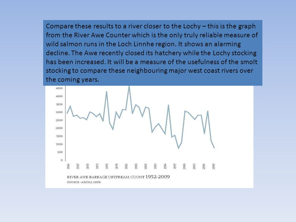 Compare these results to a river closer to the Lochy – this is the graph from the River Awe Counter which is the only truly reliable measure of wild salmon runs in the Loch Linnhe region.