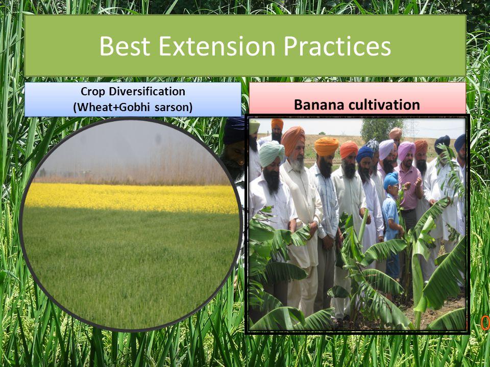 Best Extension Practices Crop Diversification (Wheat+Gobhi sarson) Crop Diversification (Wheat+Gobhi sarson) Banana cultivation