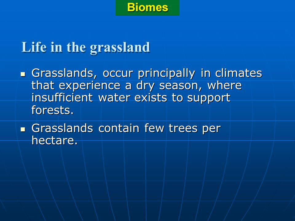 Section 3.2 Summary – pages 70-83 Grasslands, occur principally in climates that experience a dry season, where insufficient water exists to support f