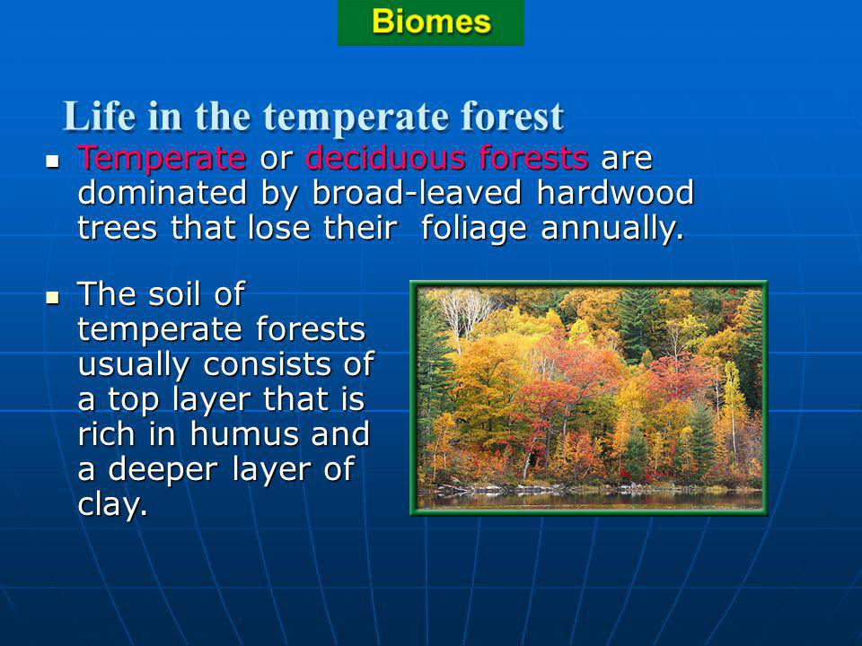 Section 3.2 Summary – pages 70-83 Temperate or deciduous forests are dominated by broad-leaved hardwood trees that lose their foliage annually. Temper