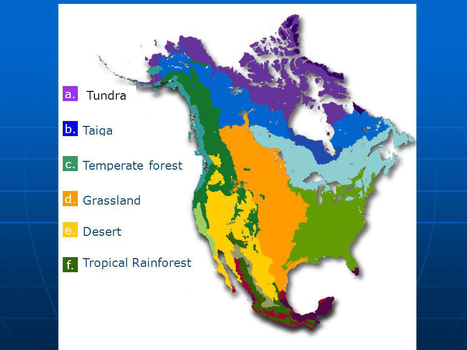 a. Tundra a. Taiga b. nothing c. Temperate forest d. Grassland Temperate forest e. Desert Temperate forest f. Tropical Rainforest Temperate forest