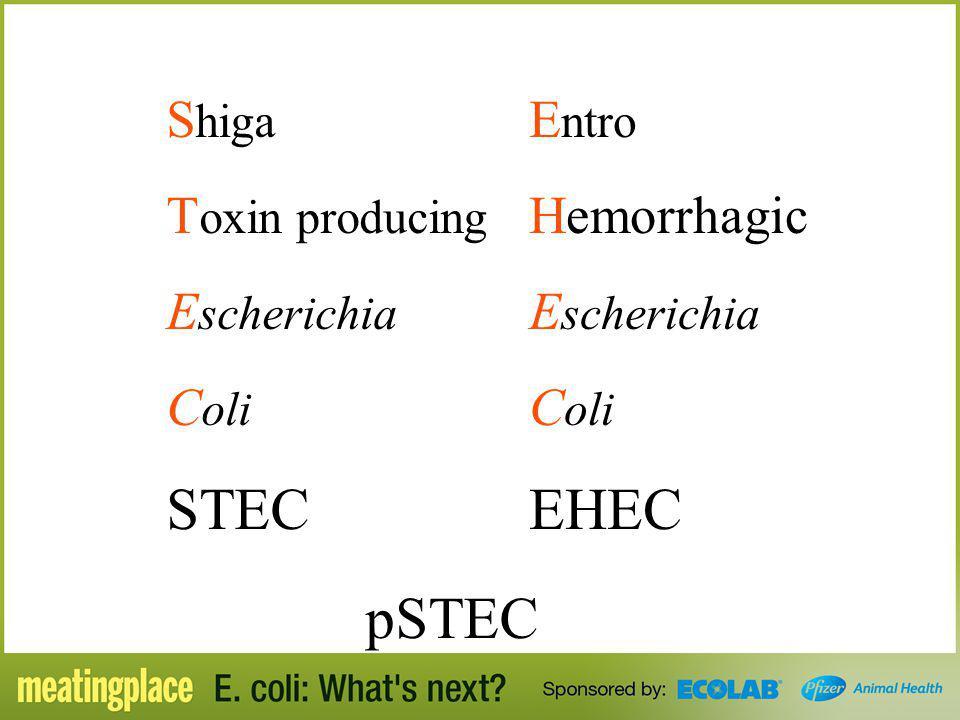 S higa T oxin producing E scherichia C oli STEC E ntro Hemorrhagic E scherichia C oli EHEC pSTEC