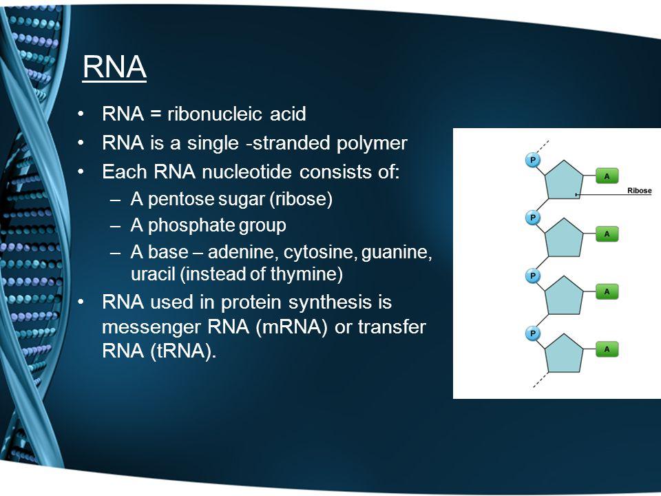 RNA RNA = ribonucleic acid RNA is a single -stranded polymer Each RNA nucleotide consists of: –A pentose sugar (ribose) –A phosphate group –A base – a