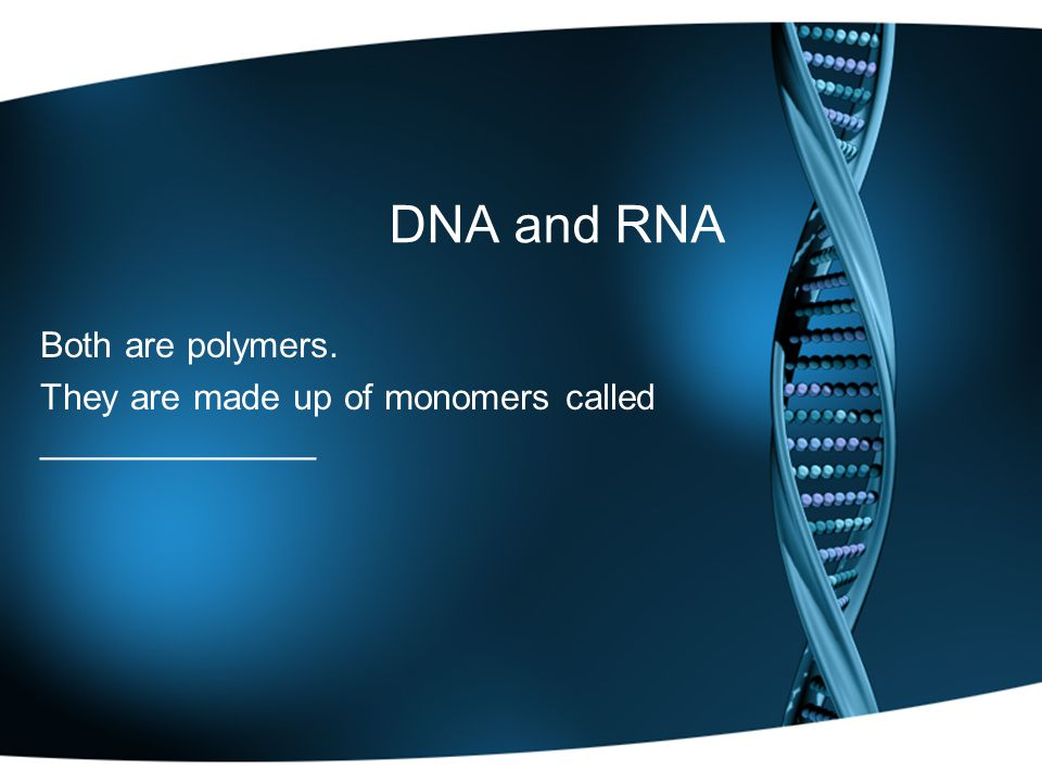 DNA and RNA Both are polymers. They are made up of monomers called ______________