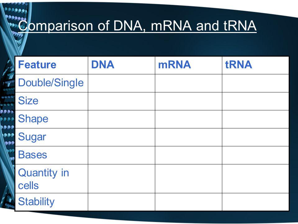 Comparison of DNA, mRNA and tRNA FeatureDNAmRNAtRNA Double/Single Size Shape Sugar Bases Quantity in cells Stability