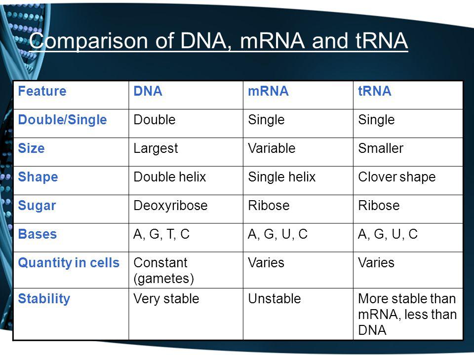 Comparison of DNA, mRNA and tRNA FeatureDNAmRNAtRNA Double/SingleDoubleSingle SizeLargestVariableSmaller ShapeDouble helixSingle helixClover shape Sug