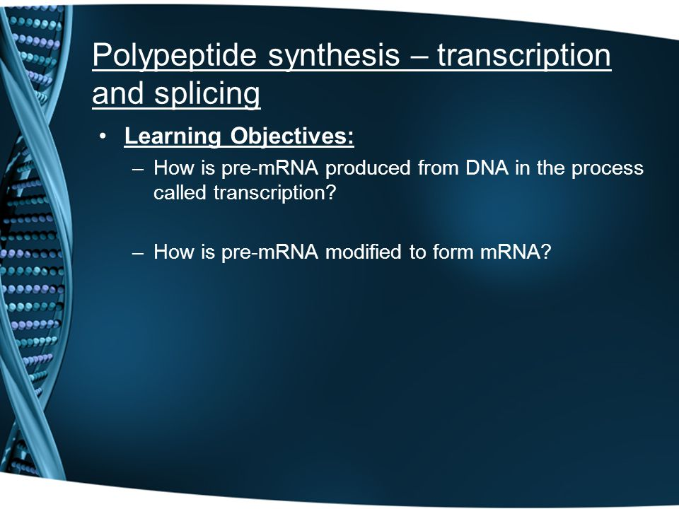 Polypeptide synthesis – transcription and splicing Learning Objectives: –How is pre-mRNA produced from DNA in the process called transcription? –How i