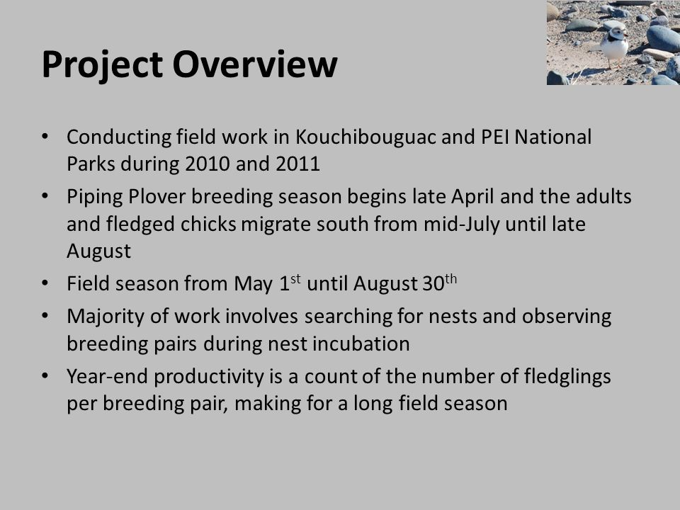 Project Overview Conducting field work in Kouchibouguac and PEI National Parks during 2010 and 2011 Piping Plover breeding season begins late April an