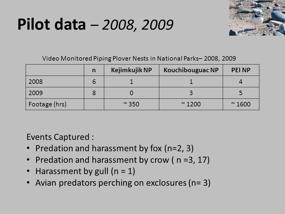 Pilot data – 2008, 2009 nKejimkujik NPKouchibouguac NPPEI NP 20086114 20098035 Footage (hrs)~ 350~ 1200~ 1600 Video Monitored Piping Plover Nests in N