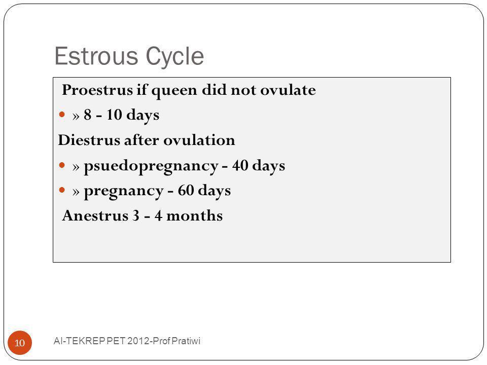 Estrous Cycle AI-TEKREP PET 2012-Prof Pratiwi 10 Proestrus if queen did not ovulate » 8 - 10 days Diestrus after ovulation » psuedopregnancy - 40 days