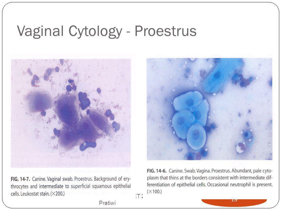 Vaginal Cytology - Proestrus AI-TEKREP PET 2012-Prof Pratiwi 19