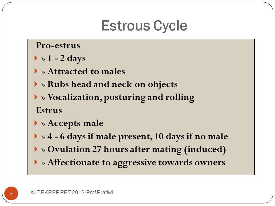 Estrous Cycle AI-TEKREP PET 2012-Prof Pratiwi 10 Proestrus if queen did not ovulate » 8 - 10 days Diestrus after ovulation » psuedopregnancy - 40 days » pregnancy - 60 days Anestrus 3 - 4 months