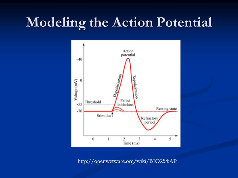 Modeling the Action Potential http://openwetware.org/wiki/BIO254:AP