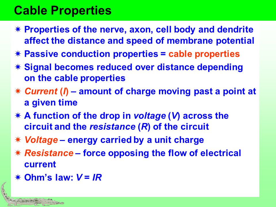 Conduction Speed Two ways to increase speed: myelin and increasing the diameter of the axon Table 5.3