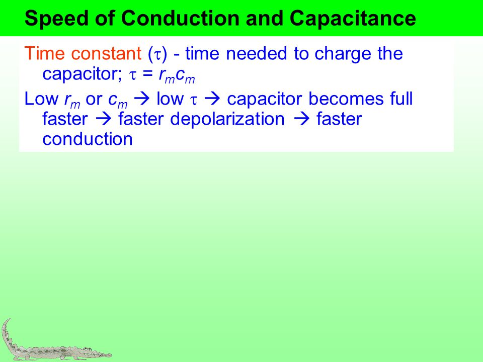 Speed of Conduction and Capacitance Time constant ( ) - time needed to charge the capacitor; = r m c m Low r m or c m low capacitor becomes full faste