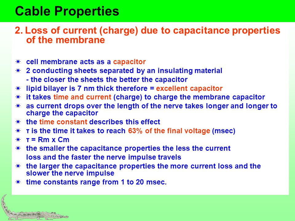Cable Properties 2. Loss of current (charge) due to capacitance properties of the membrane cell membrane acts as a capacitor 2 conducting sheets separ