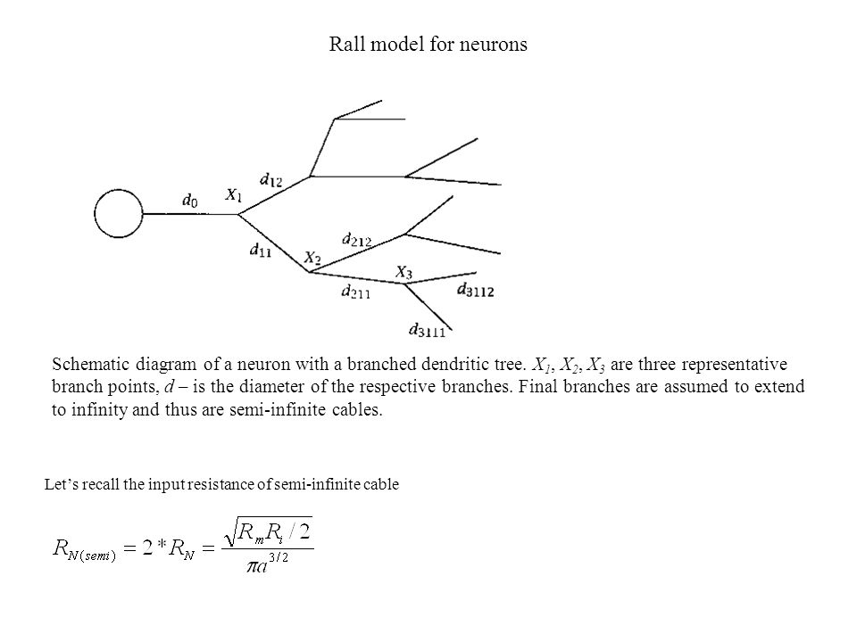 Rall model for neurons Lets recall the input resistance of semi-infinite cable Schematic diagram of a neuron with a branched dendritic tree. X 1, X 2,