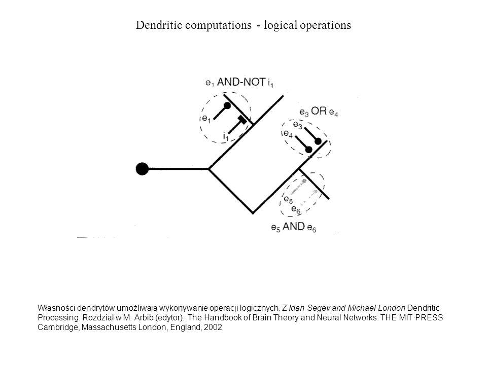 Dendritic computations - logical operations Własności dendrytów umożliwają wykonywanie operacji logicznych. Z Idan Segev and Michael London Dendritic