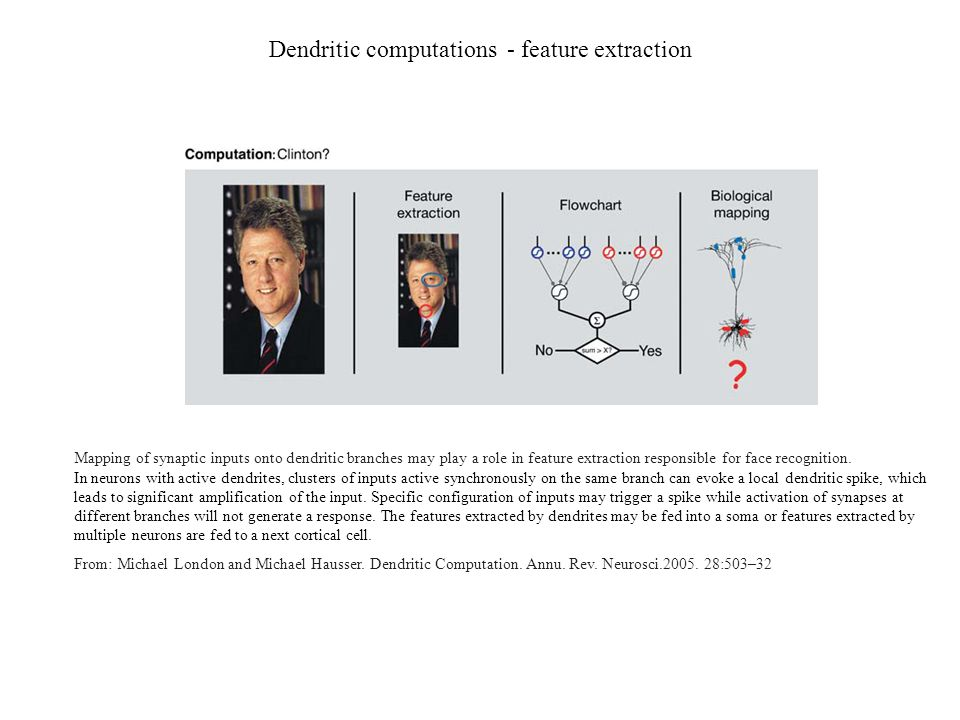 Dendritic computations - feature extraction Mapping of synaptic inputs onto dendritic branches may play a role in feature extraction responsible for f