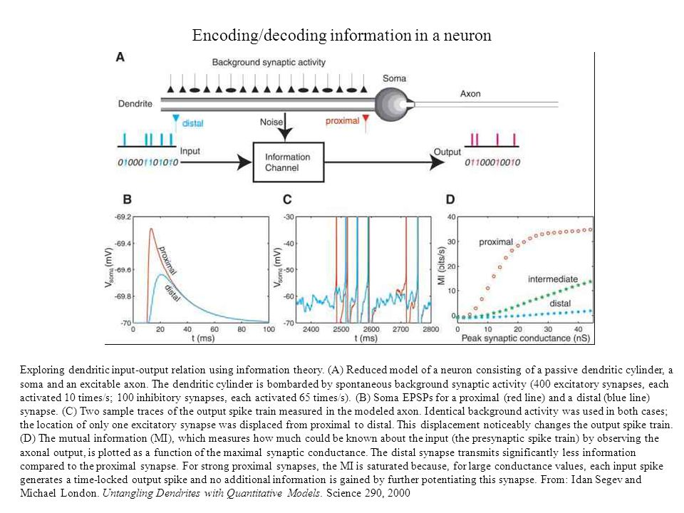 Encoding/decoding information in a neuron Exploring dendritic input-output relation using information theory. (A) Reduced model of a neuron consisting