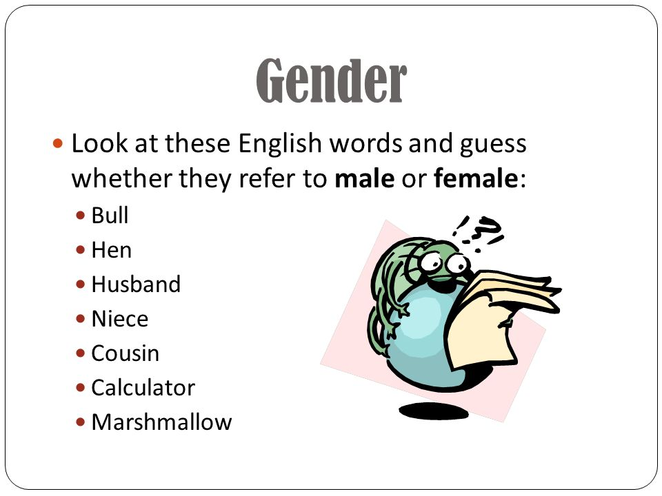 Look at these English words and guess whether they refer to male or female: Bull Hen Husband Niece Cousin Calculator Marshmallow Gender