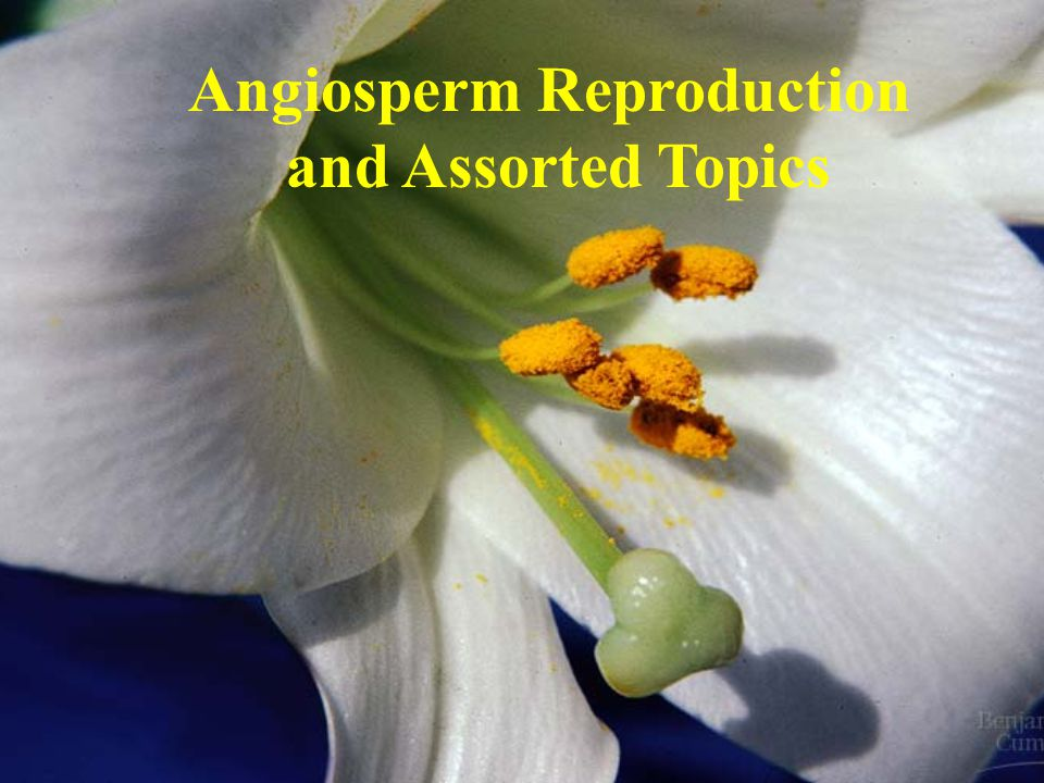 Angiosperm Reproduction and Assorted Topics