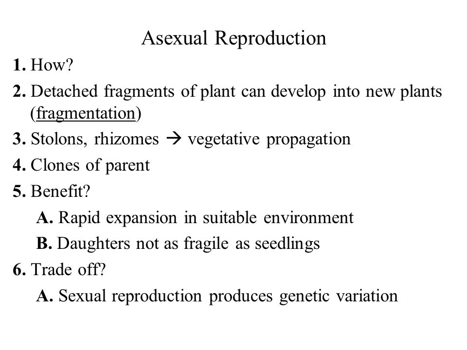 Asexual Reproduction 1. How? 2. Detached fragments of plant can develop into new plants (fragmentation) 3. Stolons, rhizomes vegetative propagation 4.