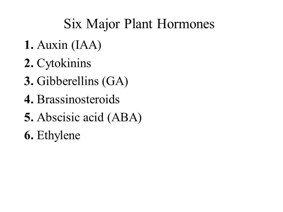 Six Major Plant Hormones 1.Auxin (IAA) 2. Cytokinins 3.