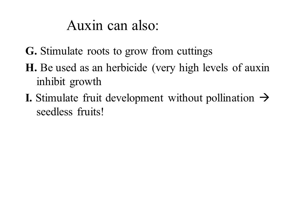Auxin can also: G. Stimulate roots to grow from cuttings H. Be used as an herbicide (very high levels of auxin inhibit growth I. Stimulate fruit devel