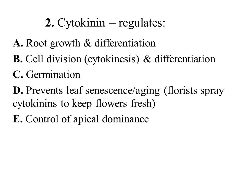 2.Cytokinin – regulates: A. Root growth & differentiation B.