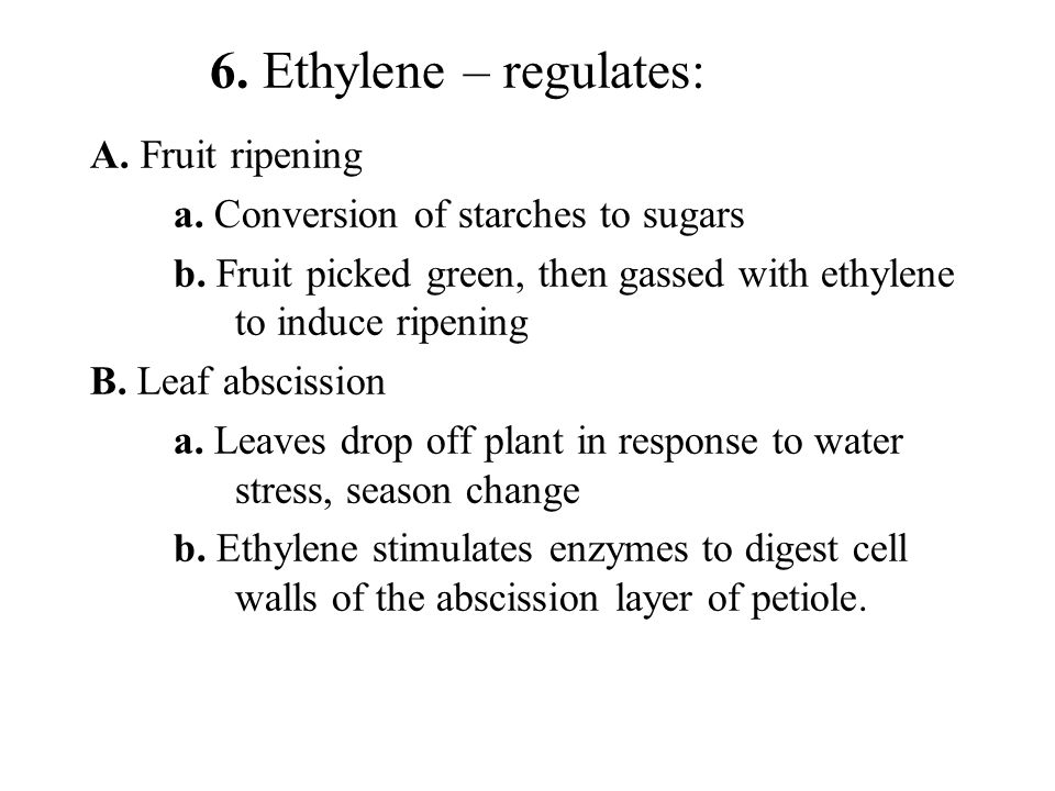 6. Ethylene – regulates: A. Fruit ripening a. Conversion of starches to sugars b. Fruit picked green, then gassed with ethylene to induce ripening B.