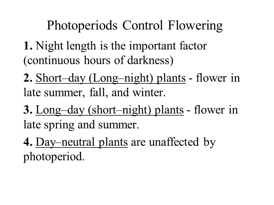 Photoperiods Control Flowering 1. Night length is the important factor (continuous hours of darkness) 2. Short–day (Long–night) plants - flower in lat
