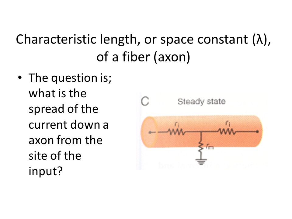 Characteristic length, or space constant (λ), of a fiber (axon) The question is; what is the spread of the current down a axon from the site of the in