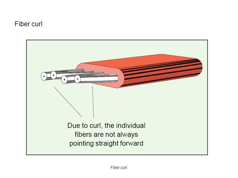 Fiber curl Fiber curl.