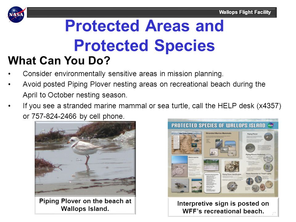 Wallops Flight Facility 17 Protected Areas and Protected Species Interpretive sign is posted on WFFs recreational beach. Piping Plover on the beach at