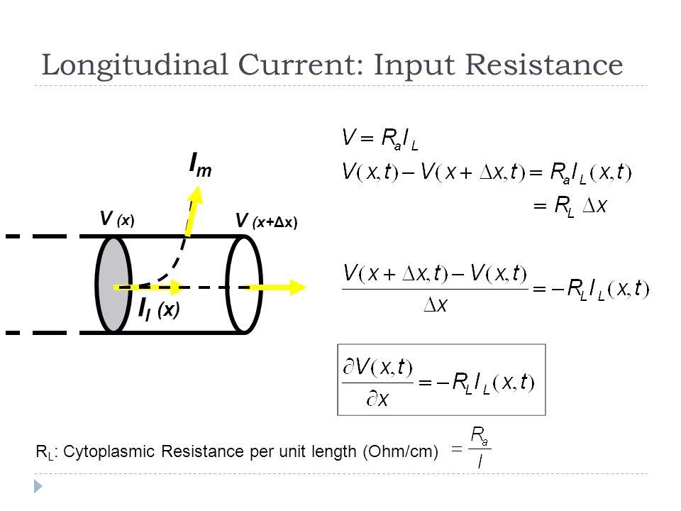 Longitudinal Current: Input Resistance I l (x) V (x+Δx) V (x) ImIm R L : Cytoplasmic Resistance per unit length (Ohm/cm)