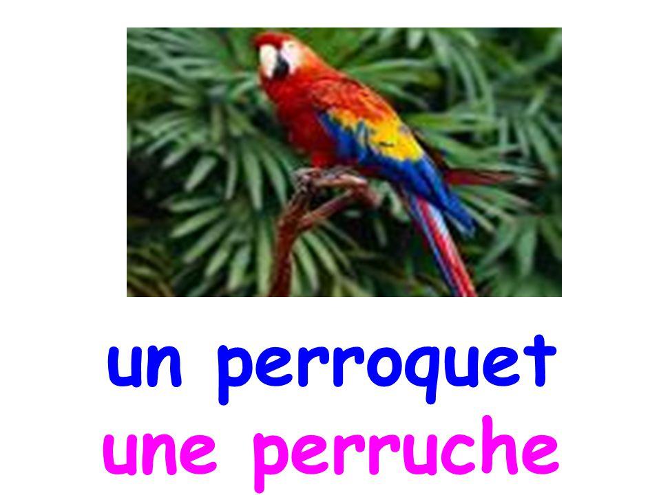 un perroquet une perruche