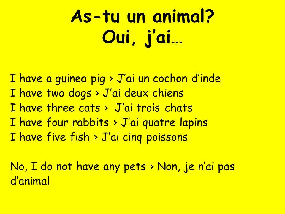 As-tu un animal? Oui, jai… I have a guinea pig Jai un cochon dinde I have two dogs Jai deux chiens I have three cats Jai trois chats I have four rabbi