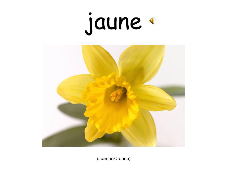 (Joanne Crease) noir